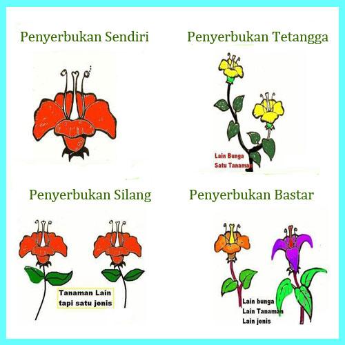 Download 43 Gambar Bunga Sempurna Dan Penjelasannya Gratis Terbaik