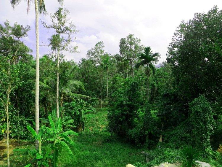 Растительность на острове Самуи