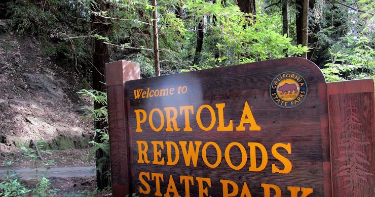 Portola Redwoods State Park, CA