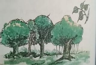 पतझड़ वन