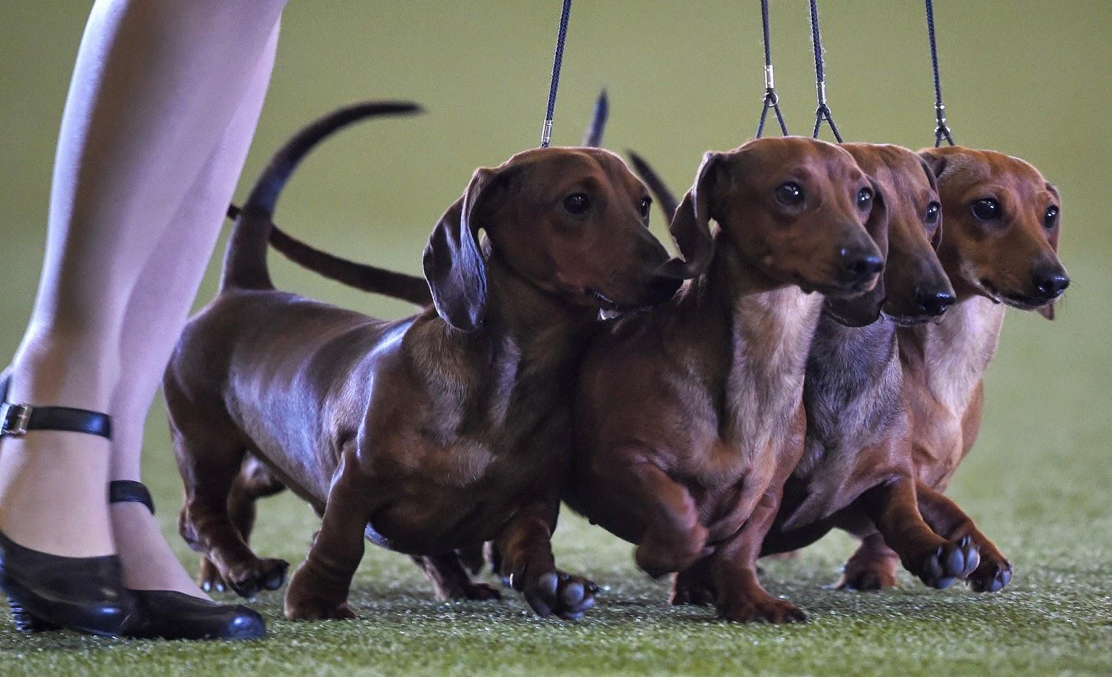 """Hund & Katz"" Pets Fair: International Dogs and Cats Show ..."