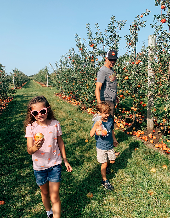 Chicago Apple Picking