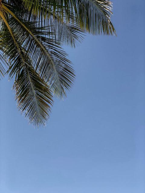 palm frond on Sanibel Island