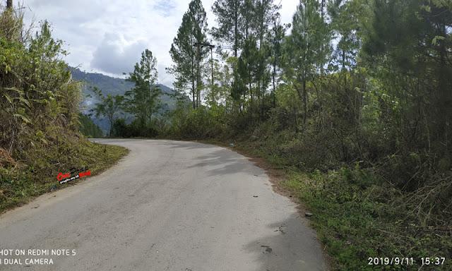 Jalan Terangun - Babahrot View Pohon Pinus
