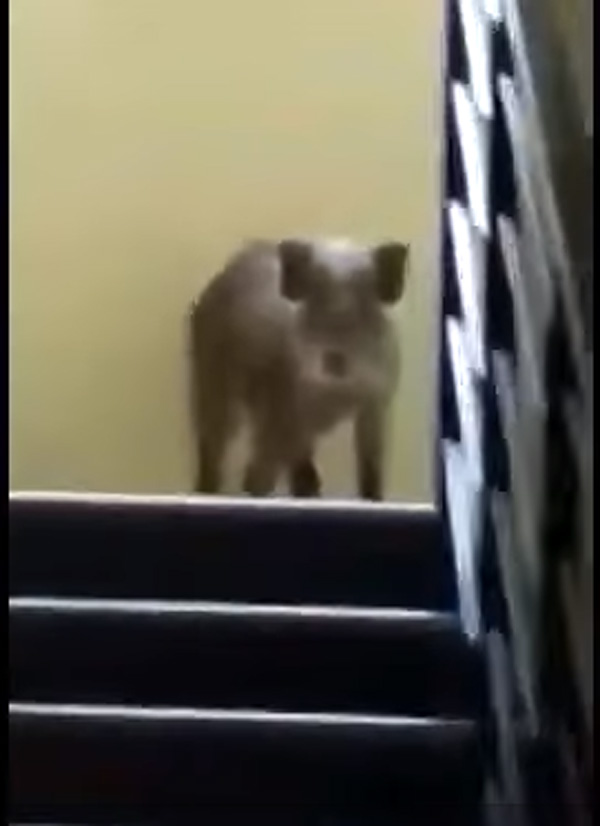 Wild bear intrudes into Wayanad Hotel, Hotel, Report, Food, Video, Kerala