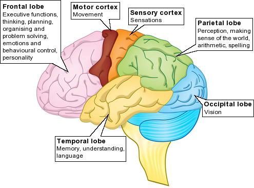 Brain Jack Image: Brain Functions Diagram