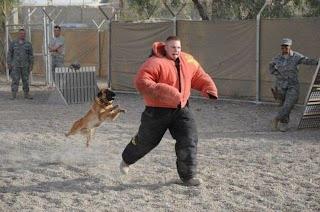 Perro atacando a entrenador