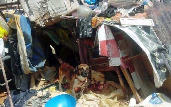 Idosa é presa em flagrante por maltratar três cães em casa cheia de lixo e entulhos no Recife