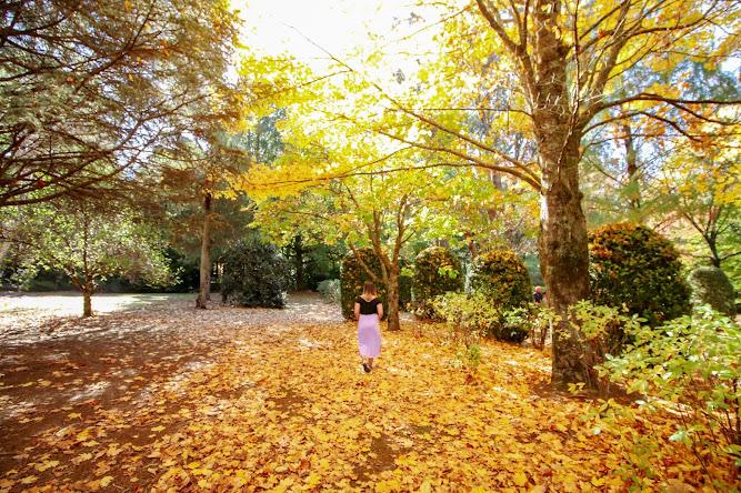 Breenhold Gardens Mount Wilson
