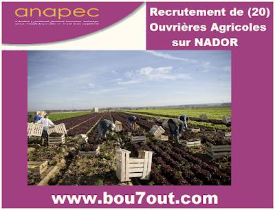 http://www.anapec.org/sigec-app-rv/entreprises/bloc_offre_home/509285/resultat_recherche
