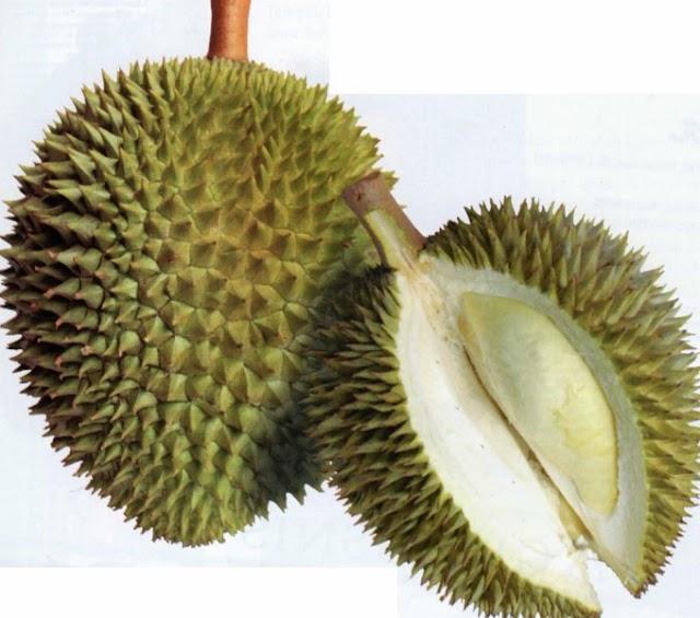 Varian Durian Terbaik Dari Provinsi Jawa Tengah