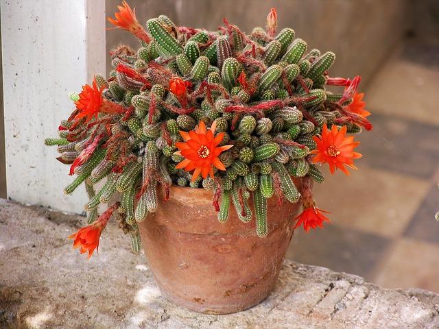 hoa xuong rong y nghia