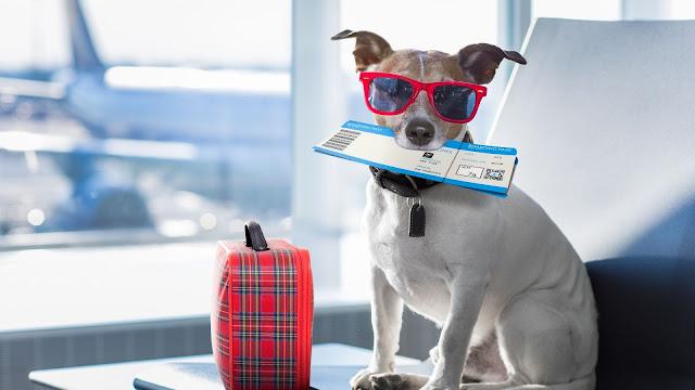 cachorro em um aeroporto