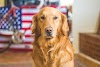 TOP 25 Most Popular Dog Breeds In World 2021