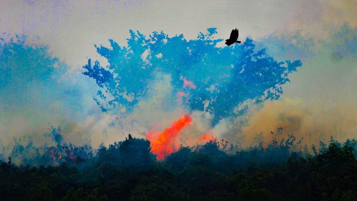O triste retrato do Brasil em chamas