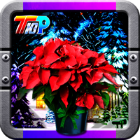 Top10NewGames Find The New Year Poinsettia