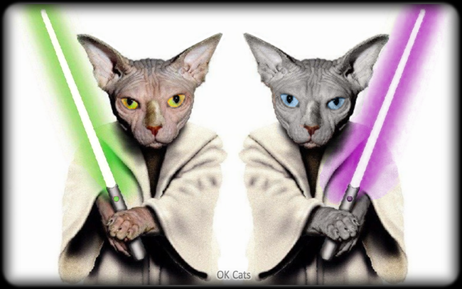 Photoshopped Cat picture • Star Wars Universe, Sphynx cat version! Yoda brothers are ready to fight!  [ok-cats.com]