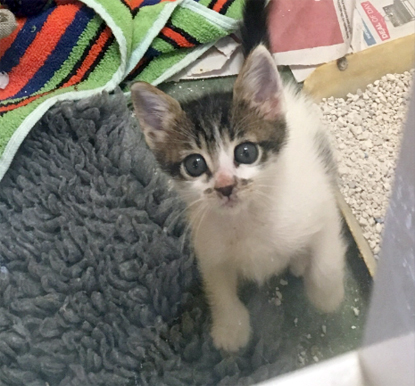 tabby and white kitten sat on blanket