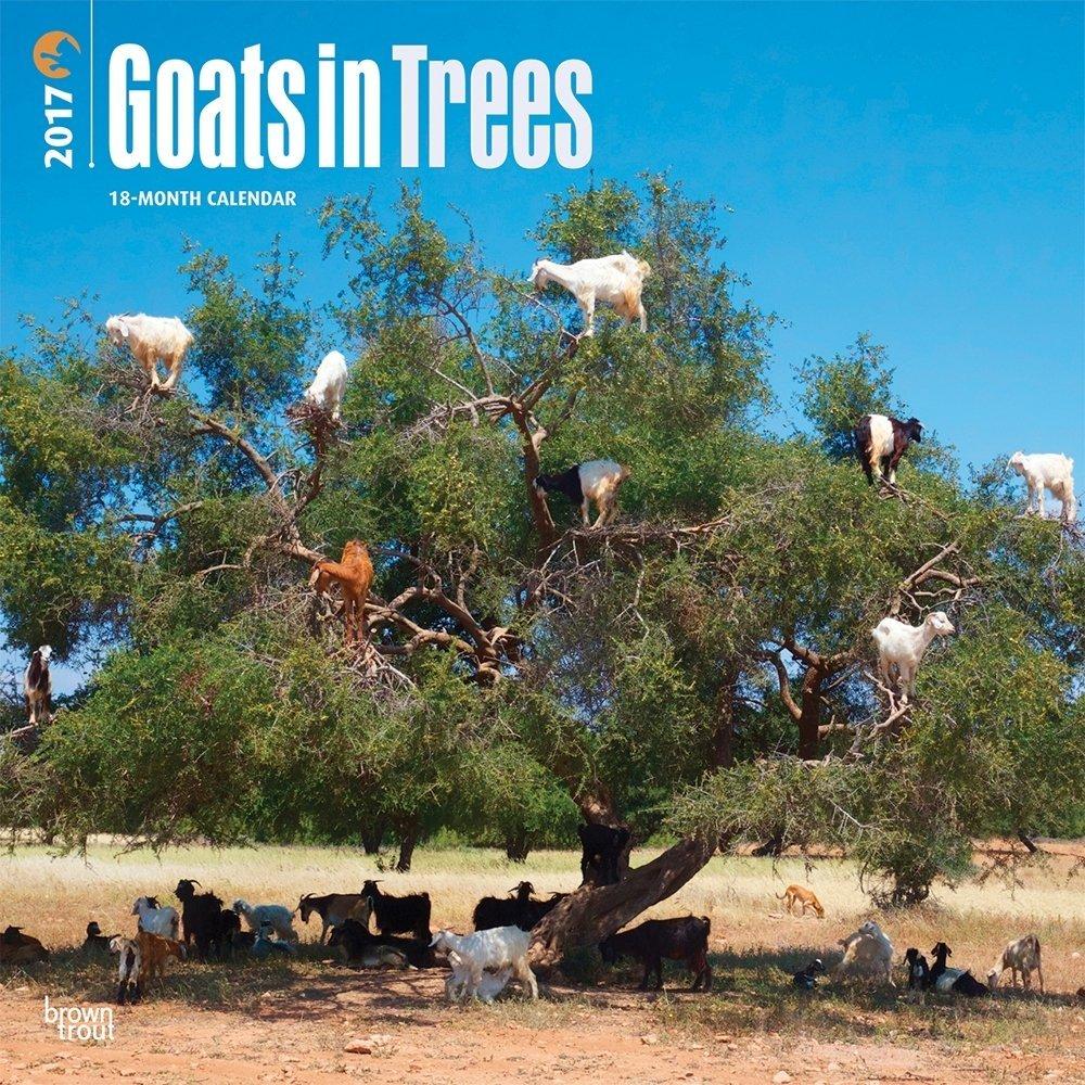 https://1.bp.blogspot.com/-FDrmlqvhQGo/WTH8kOk0FmI/AAAAAAAADkU/HhAMiOKDmfQ5akvkKTXGv5R2h_DX9WU-ACLcB/s1600/Goats-in-tree-calendar-2017.jpg