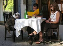 cães em restaurantes