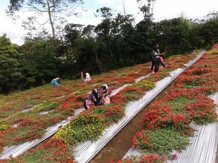 Indahnya warna-warni bunga di Kebun Bunga
