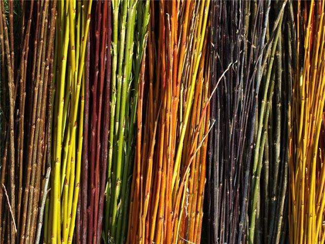 ramuri salcie, nuiele impletituri, culori ramuri, idei gradina functionala, peisagist, plante pentru impletituri