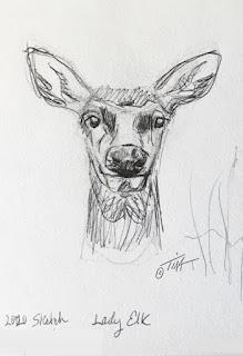"""""""Lady Elk"""" elk sketch 3 ©2020 Tina M.Welter"""