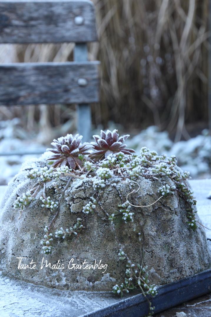 Beton Gugelhupf mit Sedum im Winter