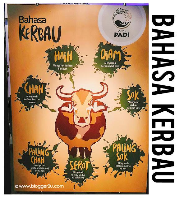 Maha 2016 bahasa Kerbau