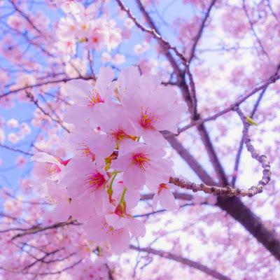 اجمل صور زهور تخطف القلوب من جمالها
