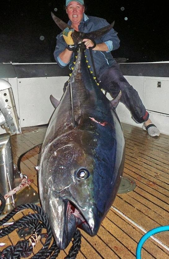 International Fishing News Australia Caught A Giant Size