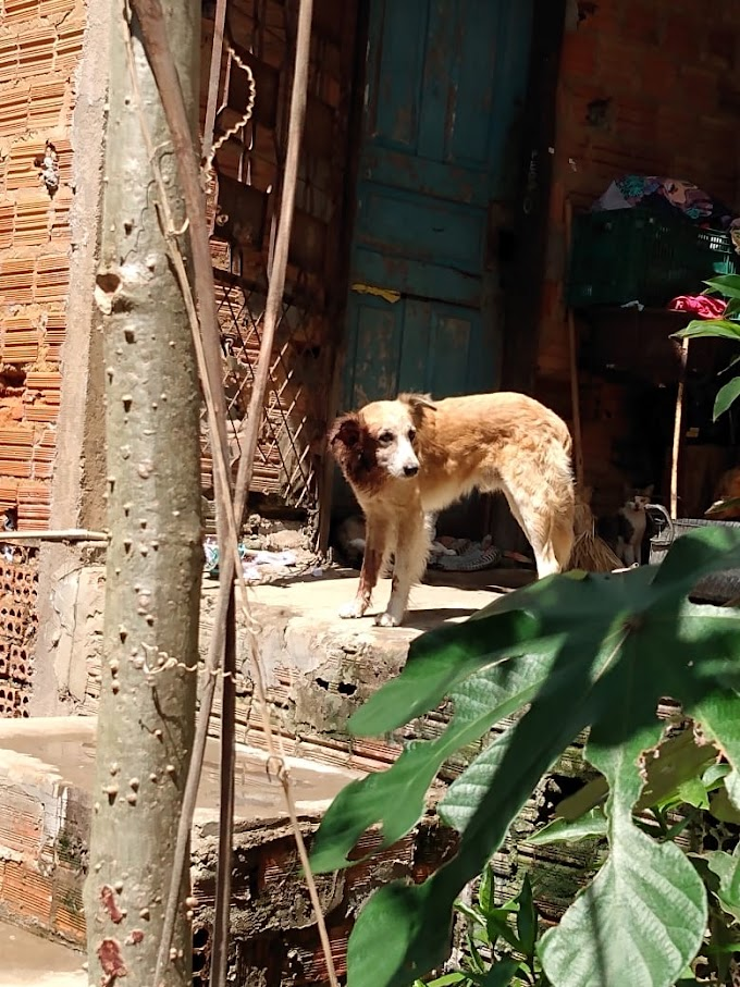 CALDEIRÕES - Corpo de Bombeiros de Caxias salva cachorro preso entre paredes