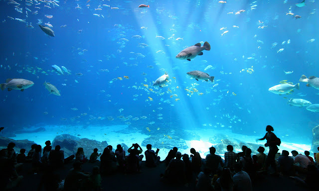 24 Best Aquariums in the United States of America for Vacation in USA