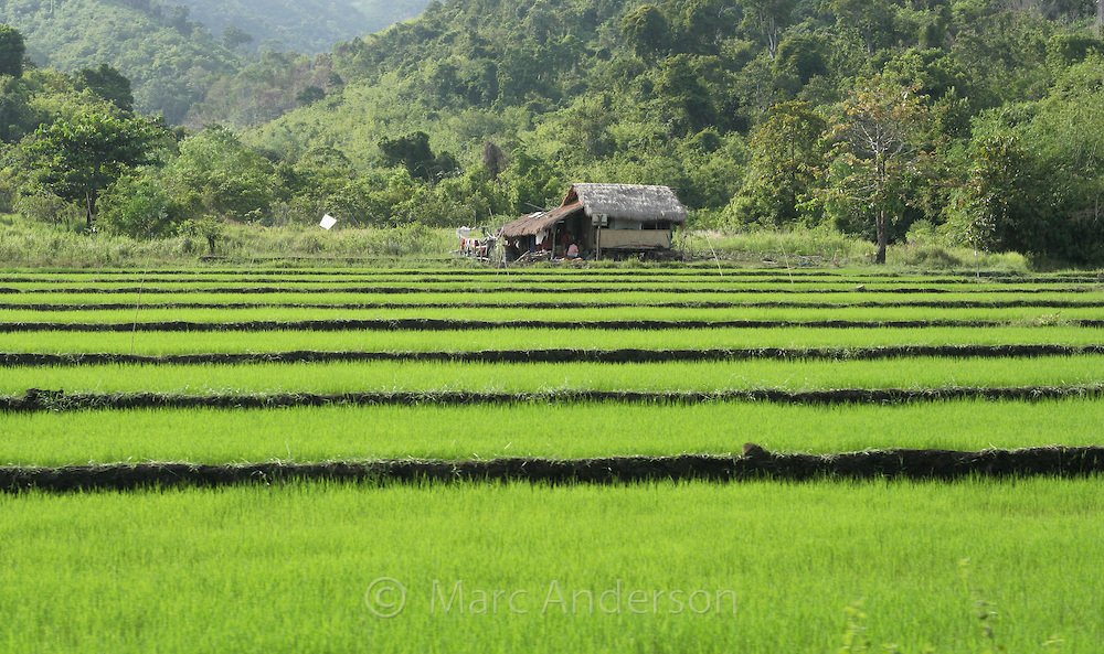"""philippine rice farmers socioeconomic status Philippine farmers learn about quality rice seed production and value of community-based seed systems at a partnership """"south asia's socioeconomic status."""