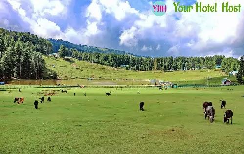 Tour Plan for Shimla Kullu Manali - Your Hotel Host
