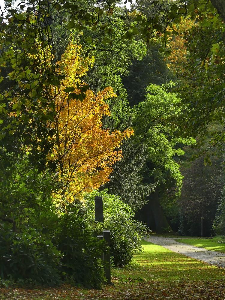 Herbststimmung,  Herbstfärbung