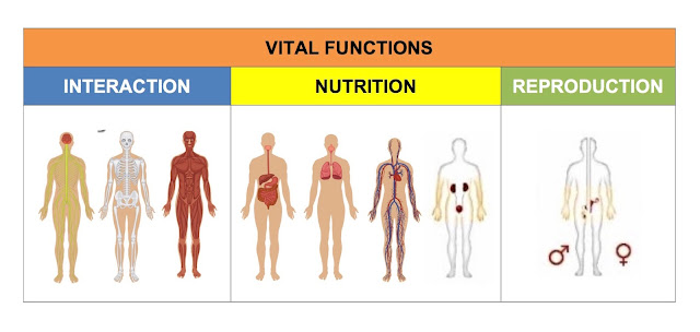 Image result for reproduction, interaction and nutrition