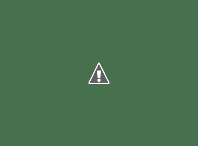 Seekor kerbau yang berhasil dievakuasi warga