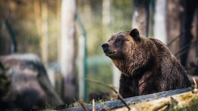 Medvecsalád bukkant fel Nógrád megyében – videó