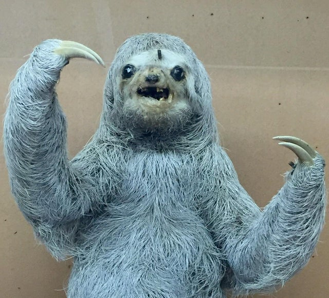 This taxidermied sloth