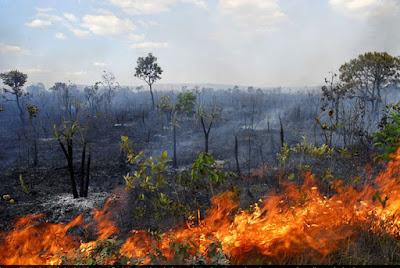 Resultado de imagem para Florestas na Amazônia pós-fogo demoram sete anos para recuperar funções