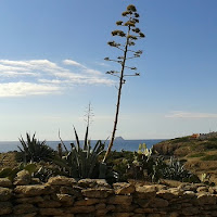 Küstenpflanze