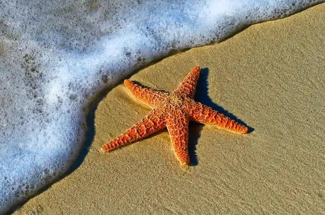 aprende ingles estrella de mar rojiza en la orilla de la playa