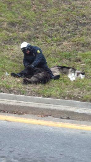 Cop Becomes A Hero For Staying With Lost Dogs Until Help Arrives