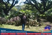 Mbak Puan Takjub Akan Pesona Wisata Hutan De Djawatan Banyuwangi