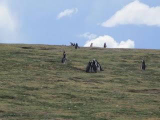 Los Pingüinos Natural Monument - Punta Arenas Chile