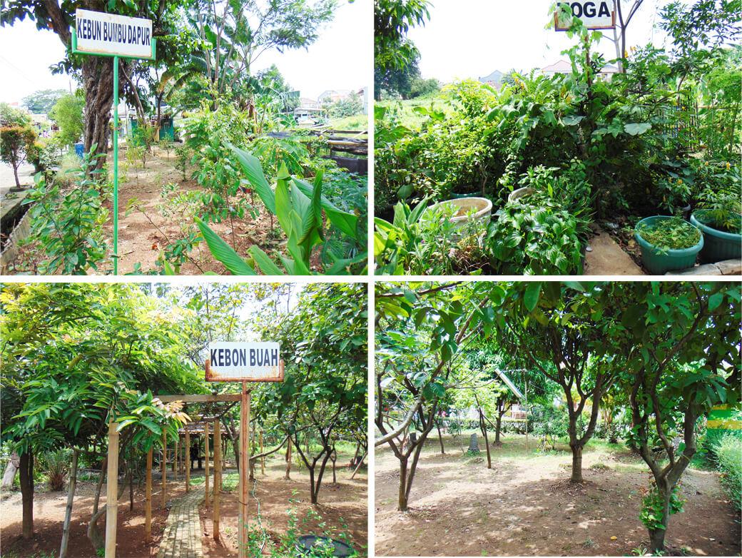 kebun buah dan obat kba pinang
