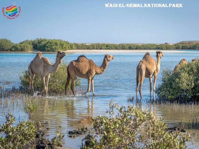 Wadi El-Gemal National Park