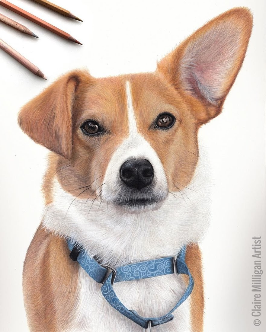 04-Pembroke-Welsh-Corgi-Claire-Milligan-Pet-Portraits-and-Wildlife-Art-www-designstack-co