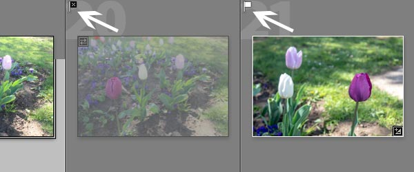 Rejected and flagged photo in Lightroom's Library module